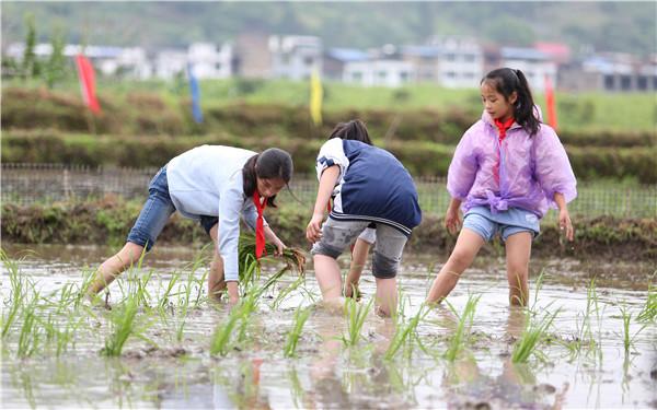 三都县周覃镇布依同胞欢度四月八 打造农旅一体乡村振兴新模式 文旅 第4张